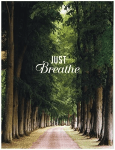just-breathe-trees